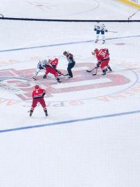 Leafs3